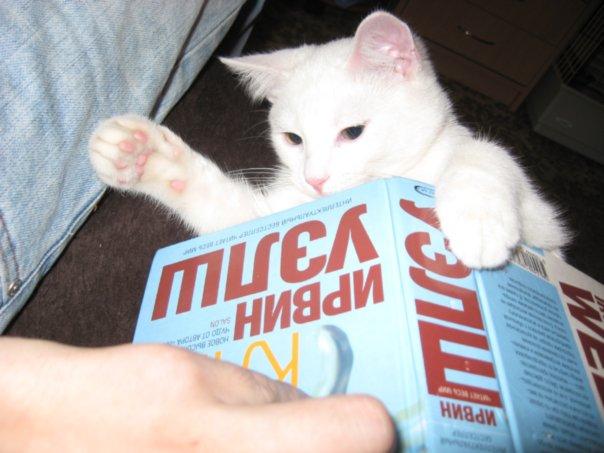http://cs236.vkontakte.ru/u126784/46589707/x_9a1a7523.jpg
